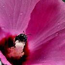 Pollen, Yum! by Debra Fedchin