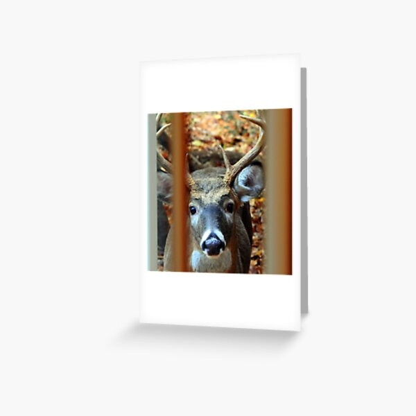 Knock at Window Greeting Card