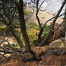 Coyote Hills  by Ellen Cotton