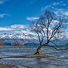 Lake Wanaka Tree by Charles Kosina