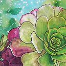 Succulent Rose by Alexandra Felgate