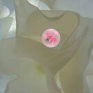 Rose In a Bubble by Linda Miller Gesualdo