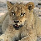 Otthawa lion cub(This is the life !) by Anthony Goldman