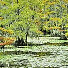 Caddo Lake by Susan Russell