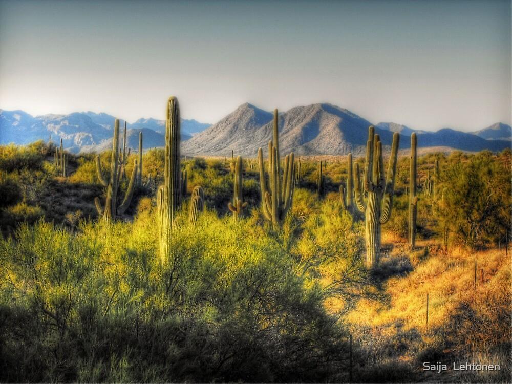 Sonoran Desert  by Saija  Lehtonen