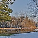 winter pond by Evan Johnson