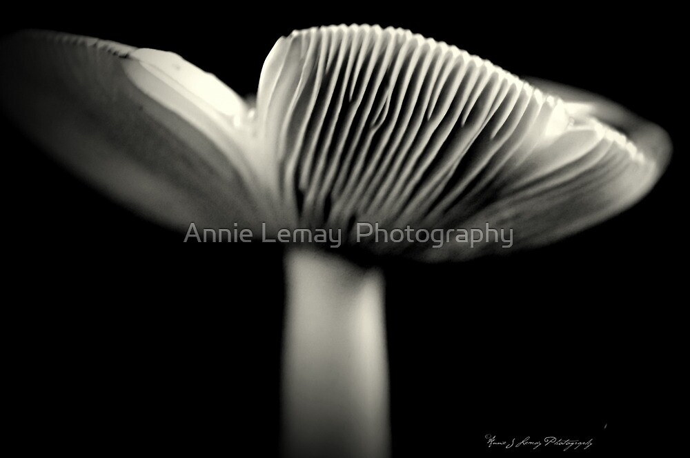 Wild by Annie Lemay  Photography
