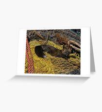 Resting Fox - Dutch Harbor Greeting Card