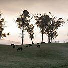 Farm Paddock, Woodstock, Tasmania by Chris Cobern