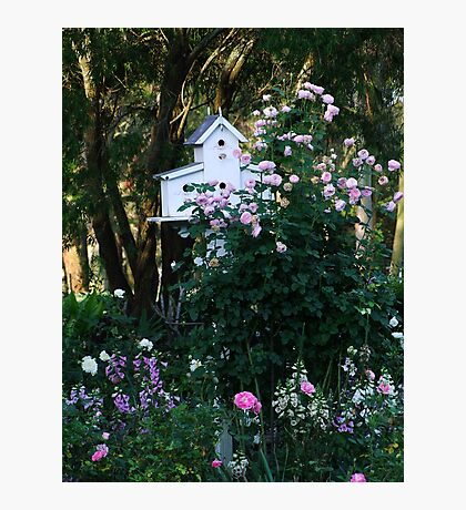 Pink Rose and Birdhouse! Photographic Print