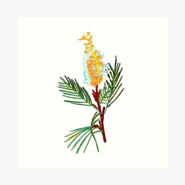 Australian Native Flower - Bottlebrush Flower Art Print