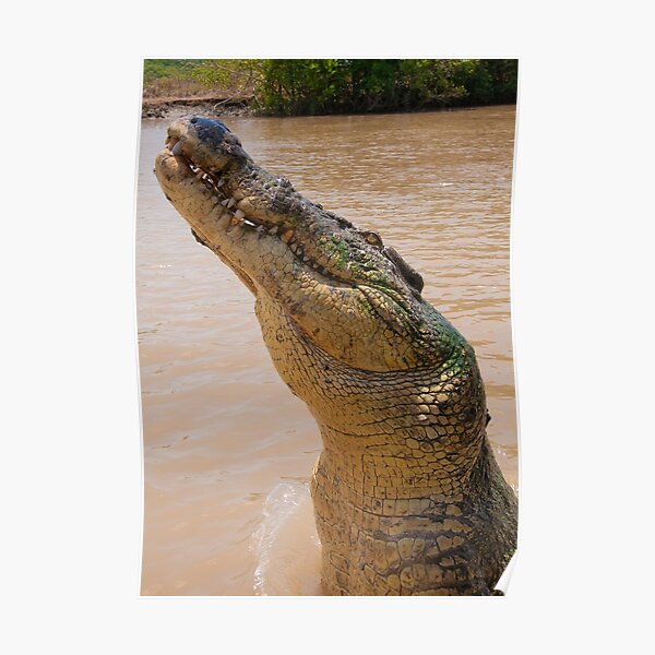 Croc smile, Northern Territory, Australia Poster