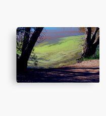 Algae Canvas Print