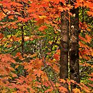 All Out Autumn by Linda Sparks