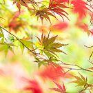 Dreamy autumn by Zoe Power