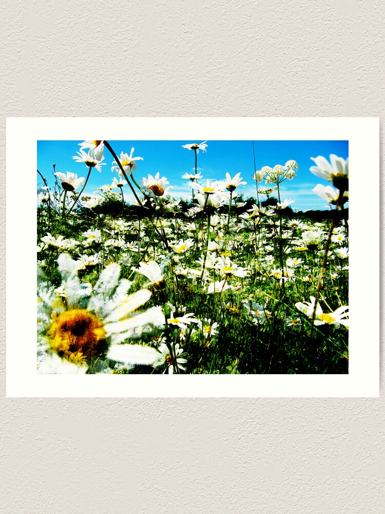 Alternate view of Daisy's Field Art Print