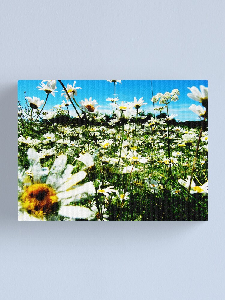 Alternate view of Daisy's Field Canvas Print