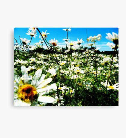 Daisy's Field Canvas Print