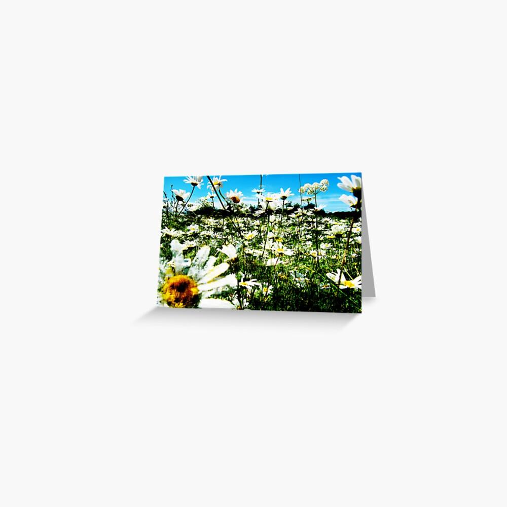 Daisy's Field Greeting Card