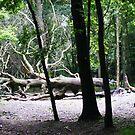 Creepy Trees by Rees Adams