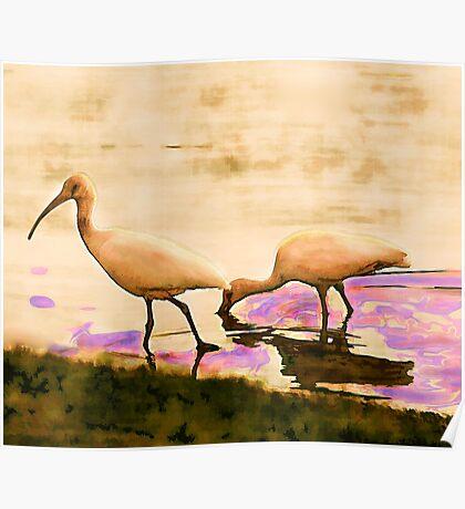 Herons at Play Poster
