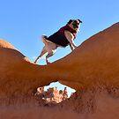 Pug Strikes A Sassy Pose by pugventurephoto