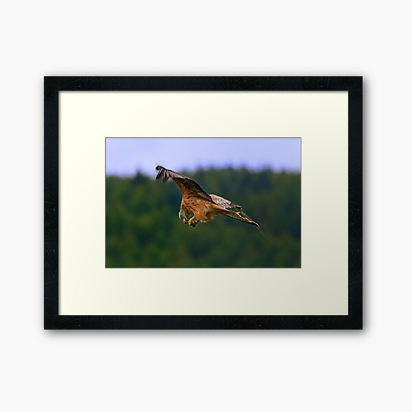 On The Wing Framed Art Print