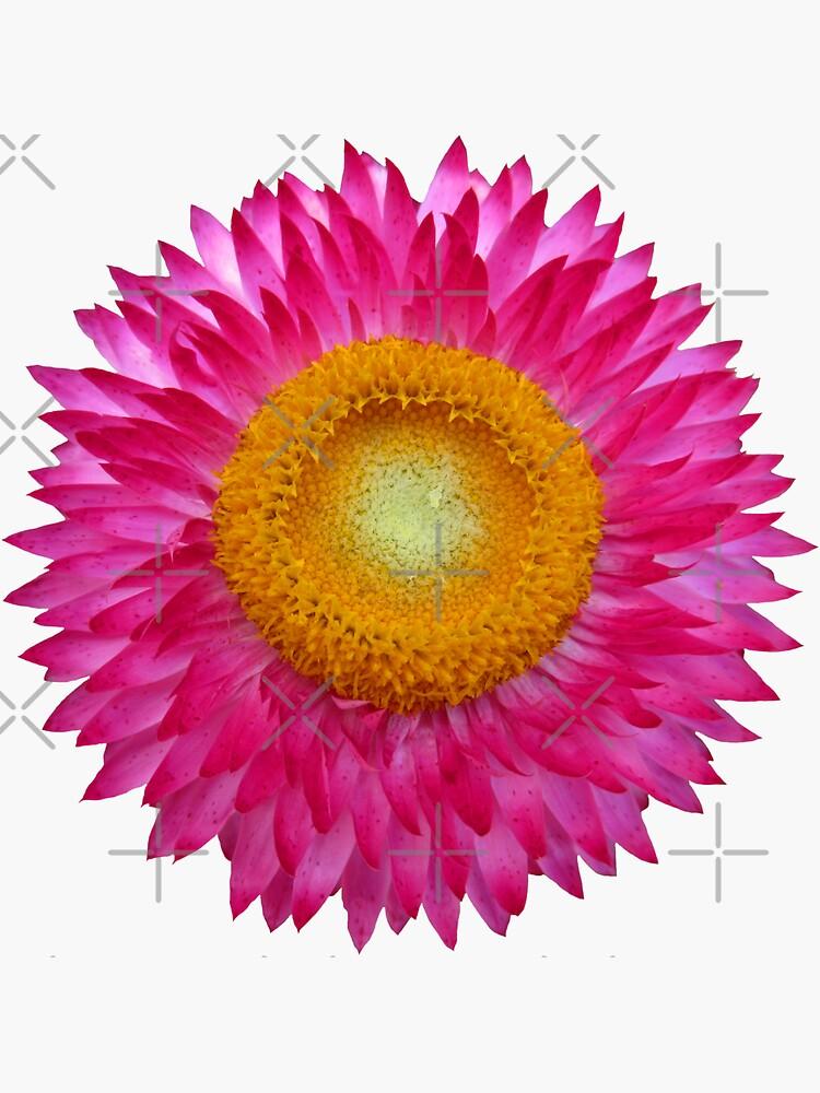 wundervolle pinke Blume, Blüte, Natur, Aster von rhnaturestyles