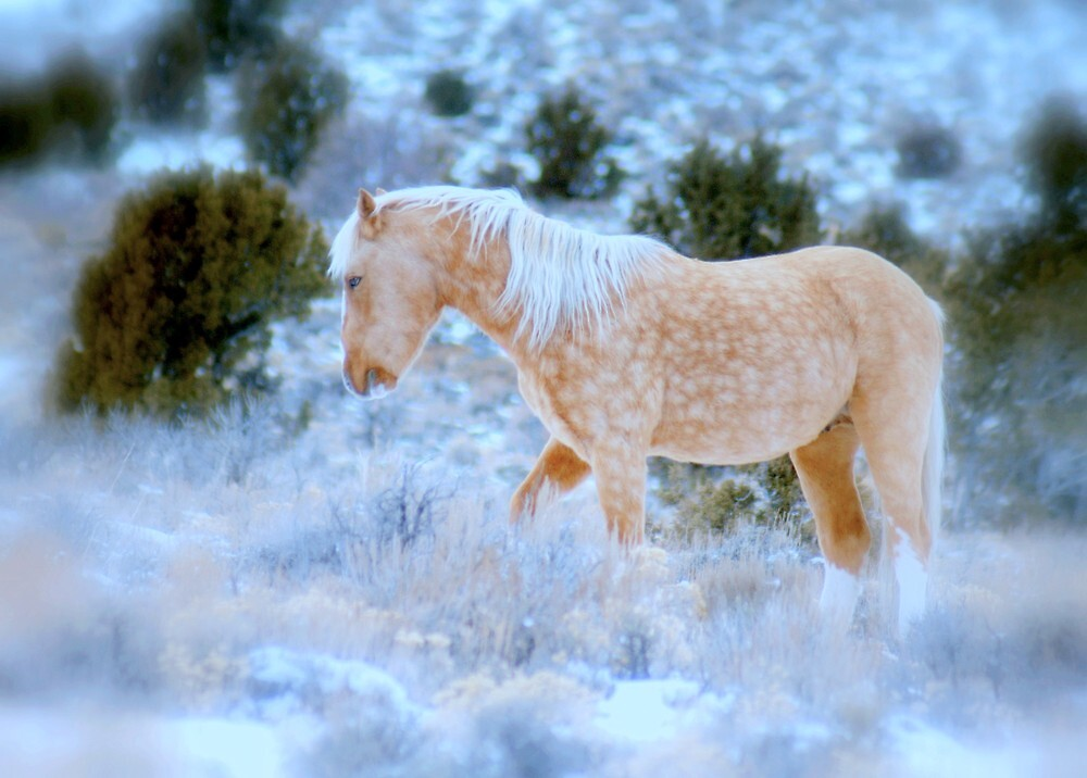 Liberty Stallion Of The Great Basin  by Jeanne  Nations