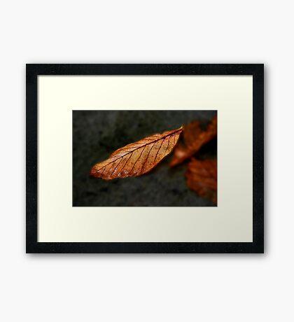 Autumn Leaf II Framed Print