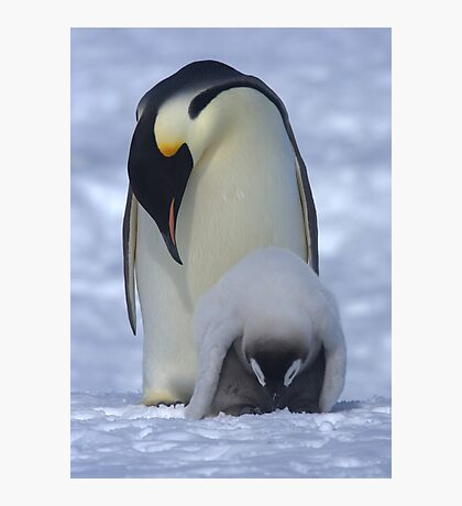 Emperor Penguin and Chick Photographic Print