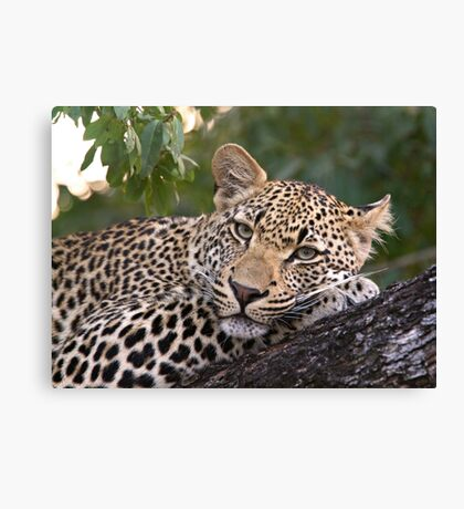 Nyaleti Young Male 2-3 Canvas Print