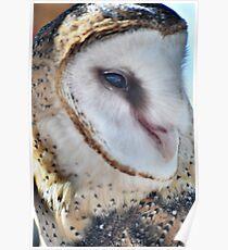 Common Barn Owl Poster