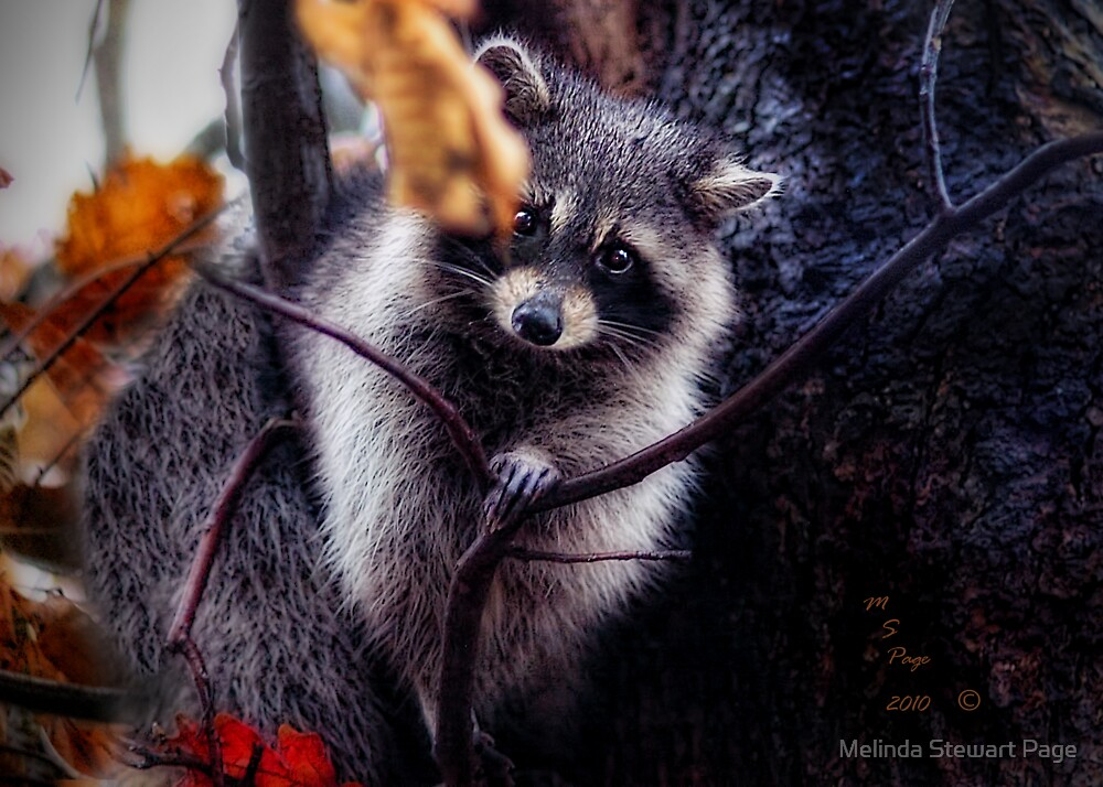 """How Do Ya Like My New Winter Coat?"" by Melinda Stewart Page"