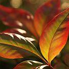 Shades of Autumn by PhotosByLeila