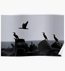 Cormorants Poster