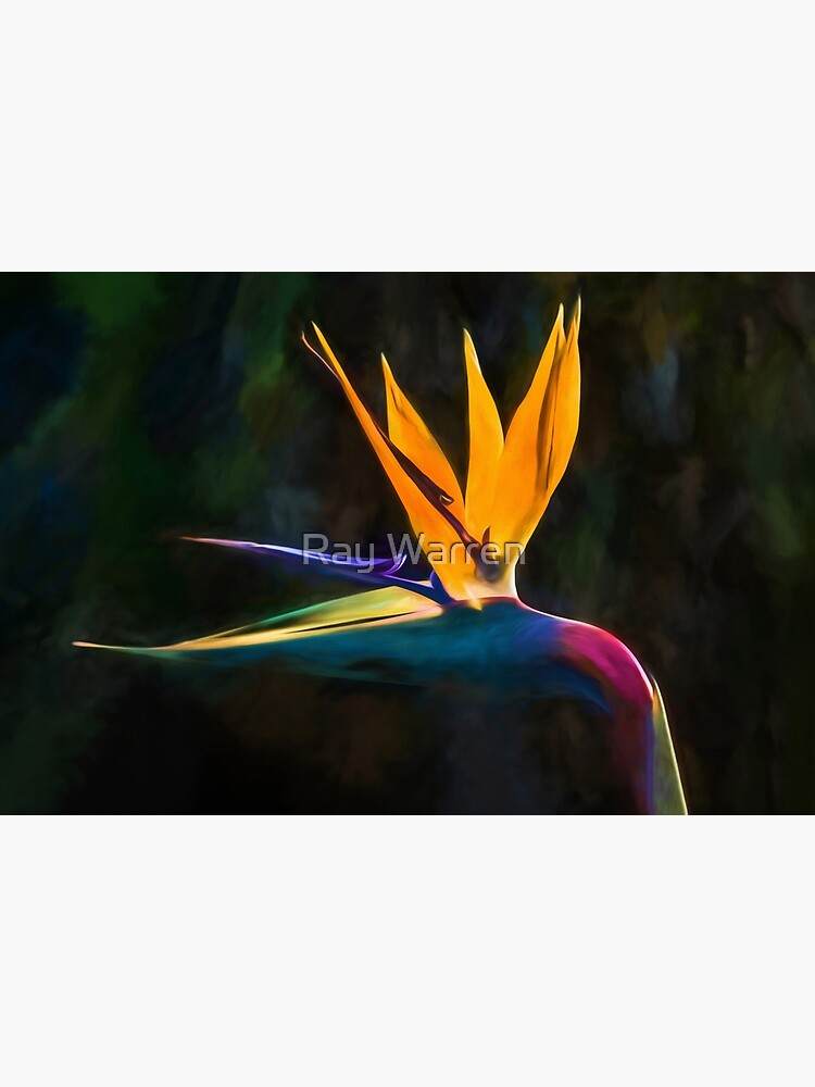 Bird of Paradise Flower (digital painting) by RayW