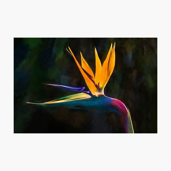Bird of Paradise Flower (digital painting) Photographic Print