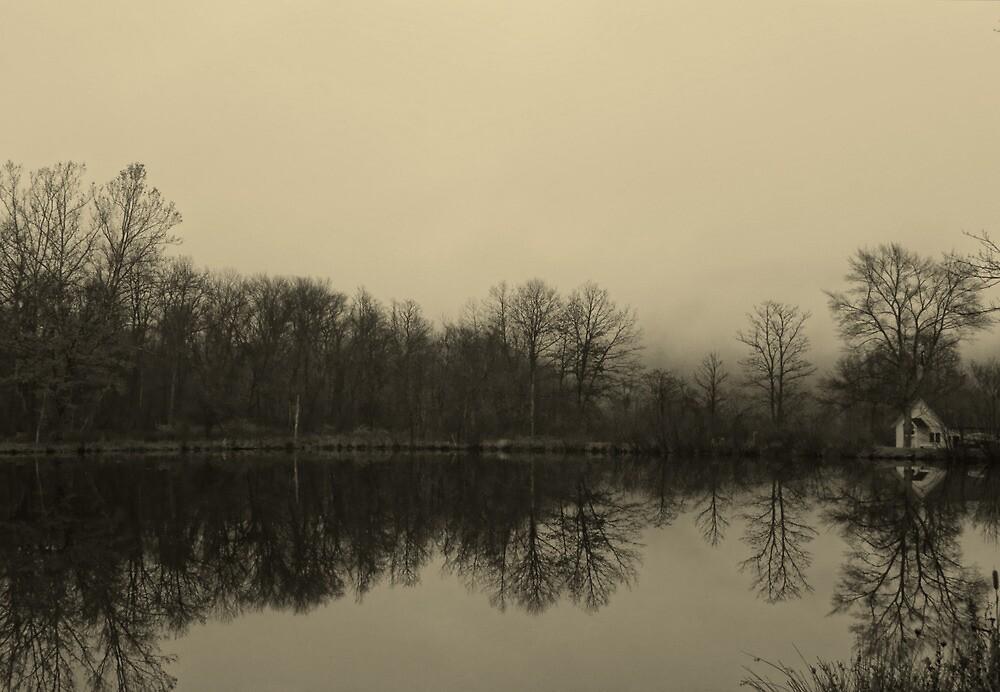Moody Morning by Pamela Phelps