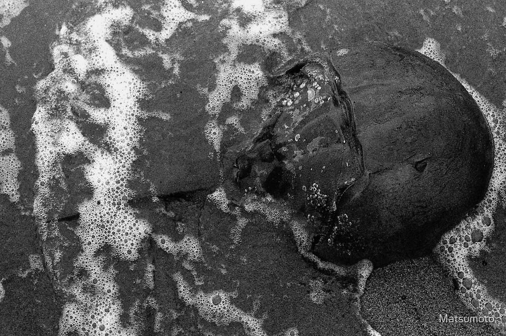 Horseshoe Crab - Limulus polyphemus by Matsumoto