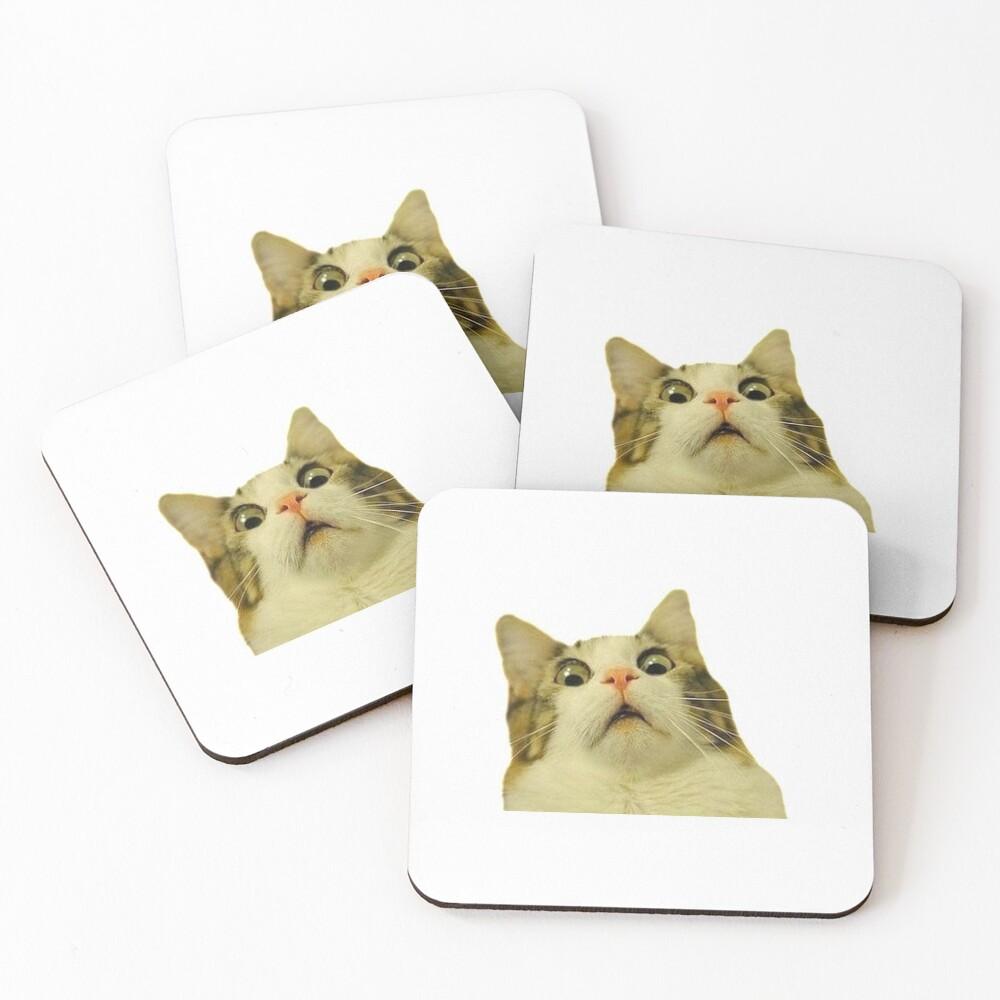surprised cat meme Coasters (Set of 4)