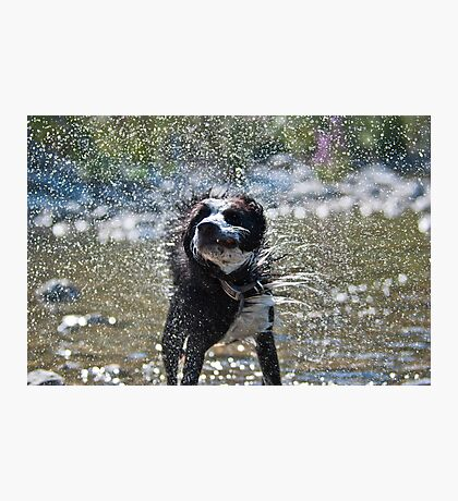 Let's shake it off Photographic Print