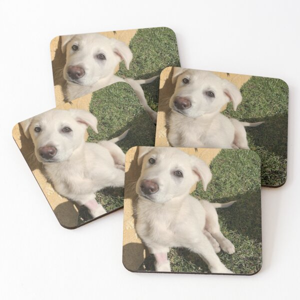 Casars 2  Coasters (Set of 4)