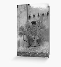 Santa Fe - Adobe Building and Tree Greeting Card