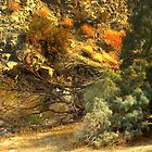 99 MILES FROM L.A...JULY IN THE CA. DESERT by SherriOfPalmSprings Sherri Nicholas-