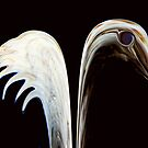 Ivory Wings © by Dawn Becker