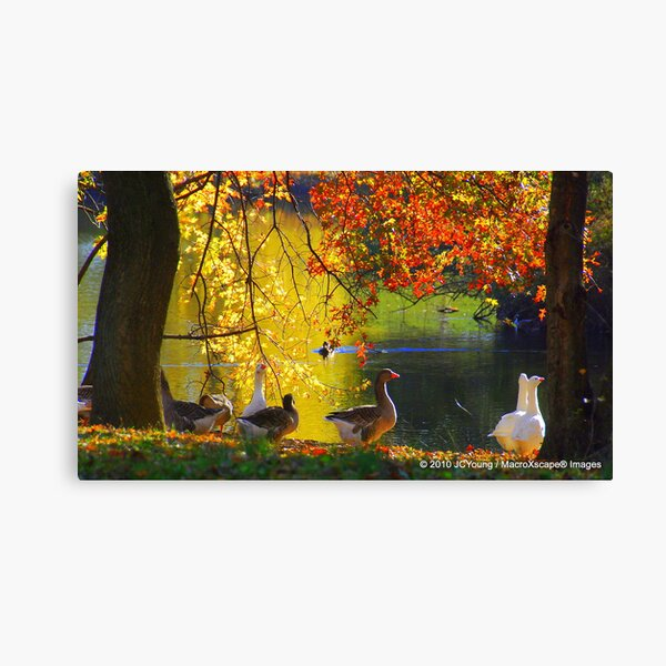 A Fall to Remember Canvas Print