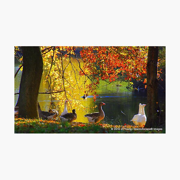 A Fall to Remember Photographic Print