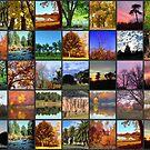 Checker Board Trees by Linda Miller Gesualdo