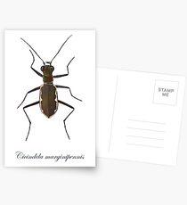 Cobblestone tiger beetle, Cicindela marginipennis Postcards